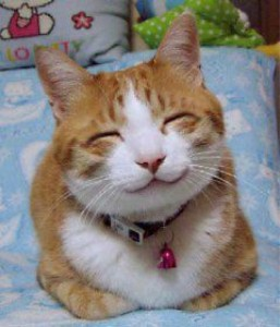 Blog - happy cat