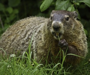 blog - groundhog 2